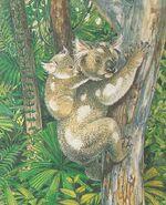 Riversleigh rainforest koala