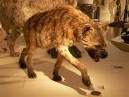 Giant Hyena