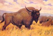 Image 2263 1e-Steppe-bison
