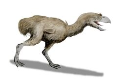 Paraphysornis BW