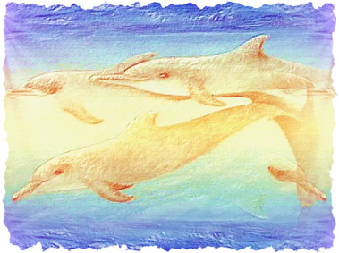Dolphins7