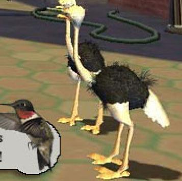 File:Ostrich-VG.jpg