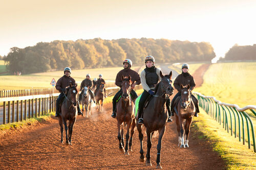 Horses in Newmarket