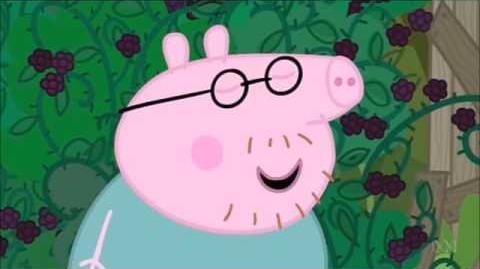Daddy Pig decides to walk through a blackberry bush