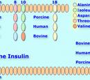 Iletin II R