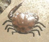 File:Crab2.jpg