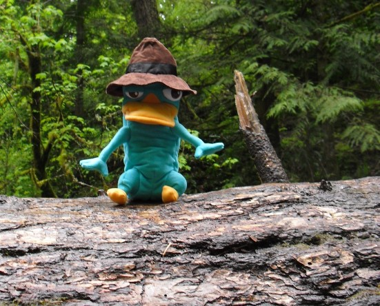 File:Multnoma Falls - Agent P on guard close-up.jpg