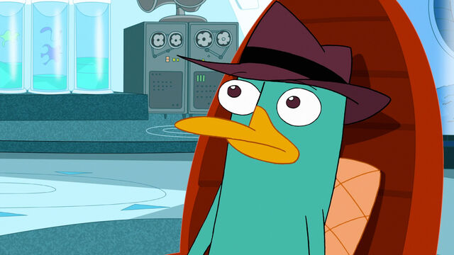 File:322a - Confused Perry.jpg