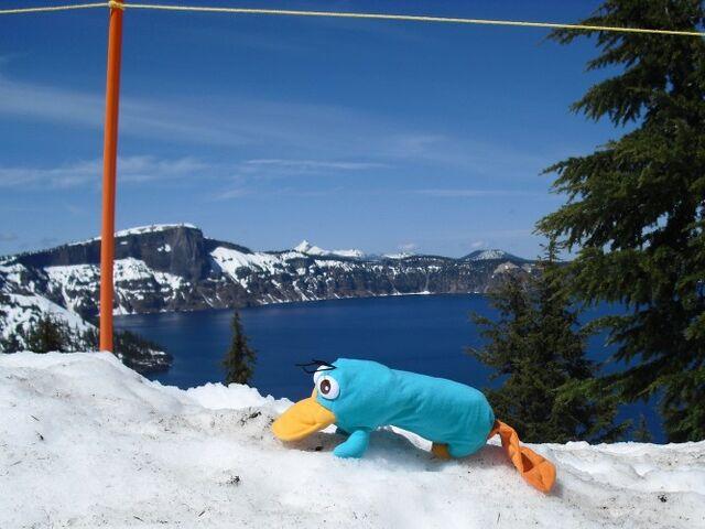 File:Perry at Crater Lake.jpg