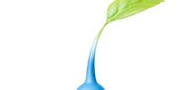 Blue Pikmin