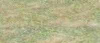 Grassterrain