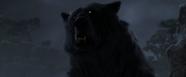 Brave-Bear4