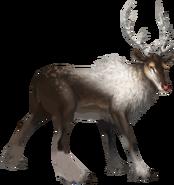 Sawsbuck Forma Inverno Arvalis
