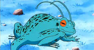 Nameczańska Żaba