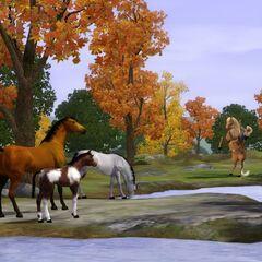 ... i Dzikie konie.