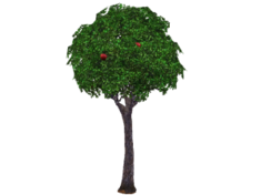 Apple-tree-300x225.png