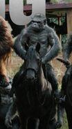 Grey on horse