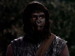Police gorilla2