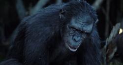 Koba in Ape Village