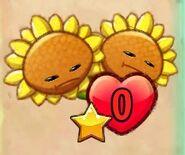 Destroyed Twin Sunflower
