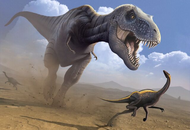 File:Actual Tyrannosauraus Rex.jpg