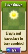 File:Lava Guava New.jpg