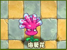 File:Anenome FlowerO.png