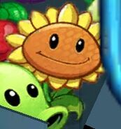 Sunflower in Multiplayer menu