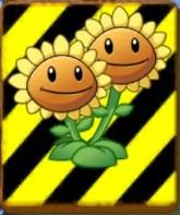 File:EndangeredTwinSunflower2.jpg