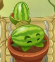 Melon-pult PvZ2 watered ZG