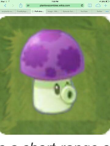File:Puff shroom.jpeg
