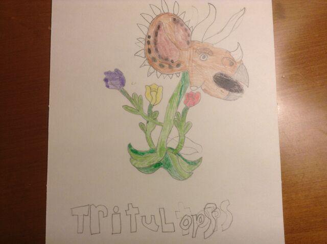 File:Tritulops.jpeg