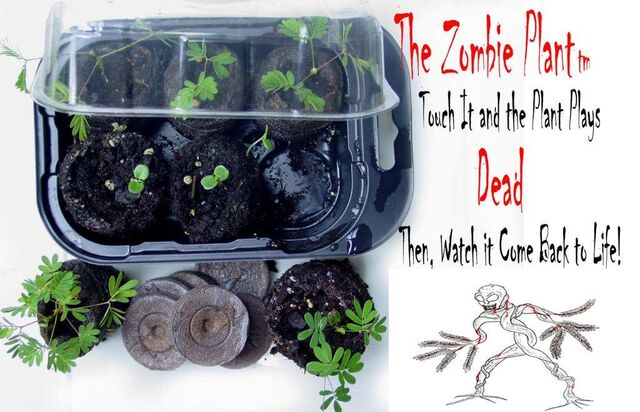 File:ZGK1 Zombie Grow Kit with seed pack 300 resolution image Vendors . copy.jpg
