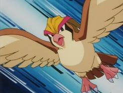 Falkner Pidgeot