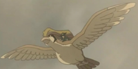 Sir Aaron's Pidgeot