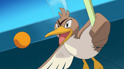 Wilkinson Farfetch'd
