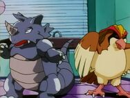 Rudy's Pidgeot and Rhydon