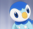 Dawn's Piplup
