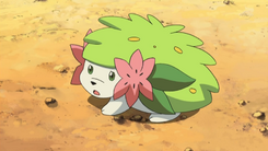 Shaymin Land anime