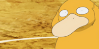 Misty's Psyduck (anime)