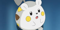 Sophocles' Togedemaru