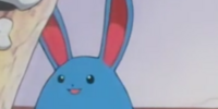 Temacu's father's Azumarill