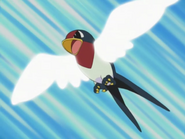 Ash Taillow Wing Attack