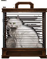 White-cat-lrg