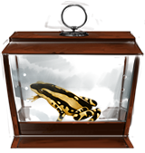 Harlequin-toad-lrg
