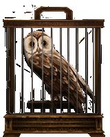 Tawny-owl-lrg