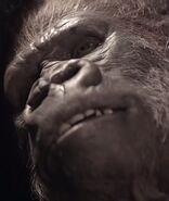 Gorilla Bruno