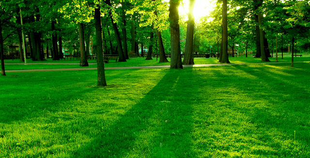 File:Environment Grass Trees.jpg