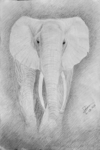 File:Elephant ghost by deandemaro-d47ccy2.jpg