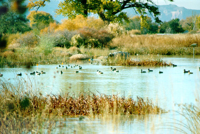 File:Wetland.jpg